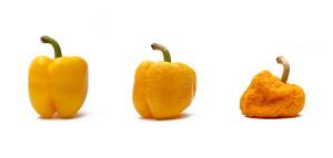 starnouci paprika